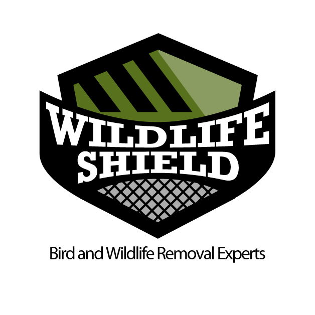 Raccoon Control - Wildlife Shield
